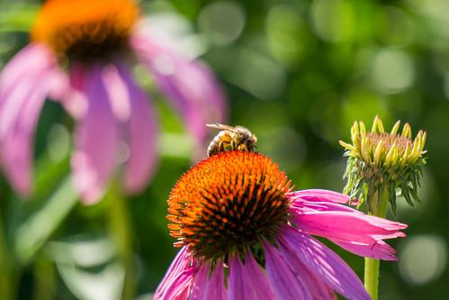 un(bee)mo  vi n(in)g are(th e)you(o only)  als(rose)eep