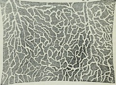 "Image from page 204 of ""Human physiology"" (1856)"