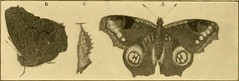 """Image from page 365 of """"Transactions of the Connecticut Academy of Arts and Sciences"""" (1866)"""