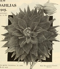 """Image from page 146 of """"Dreer's garden book 1915"""" (1915)"""