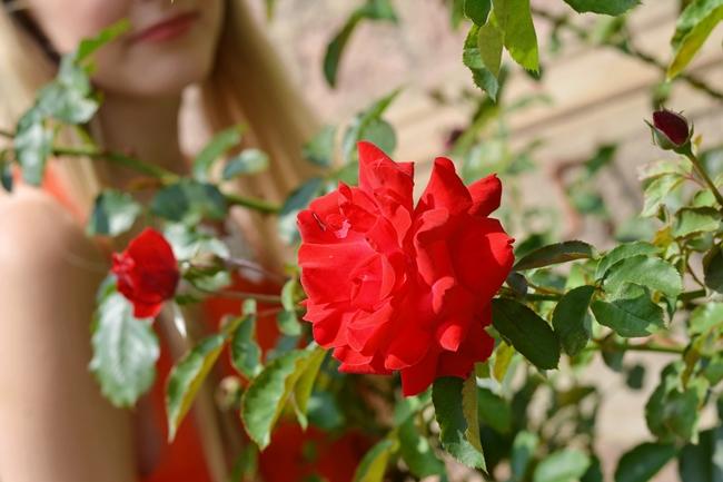 Like roses (1)