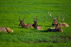 North American Wildlife 69