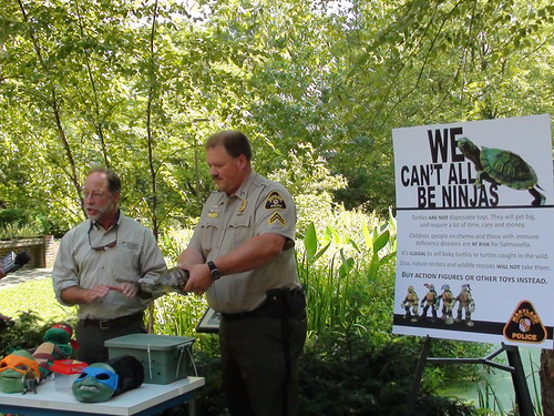 DNR Wildlife and NRP urging the public to Say Yes to Ninja Turtles, No to Baby Turtles