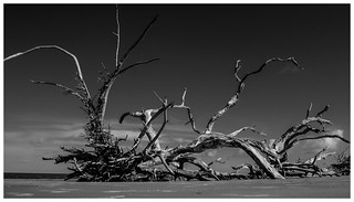 Rooted | Canon PowerShot G1 X Processed with NIK Collection