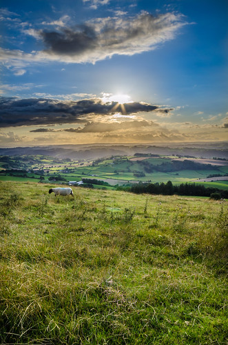 sun wales landscape photography sheep powys