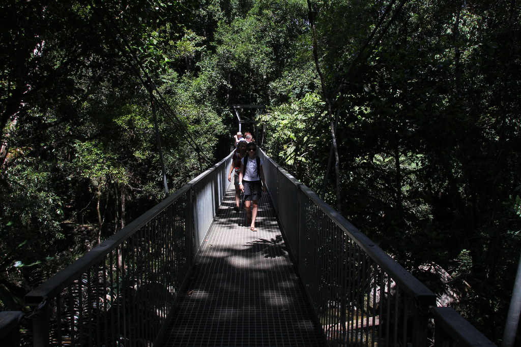 mamu rainforest walkway, johnstone river, port douglas, cayman villas, four mile beach, mossman gorge, babinda boulders, queensland