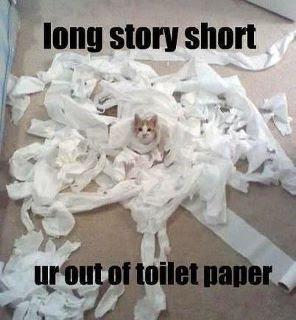 cat_toilet_paper