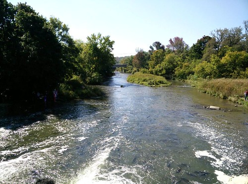 Hundreds of salmon in Port Perry watch