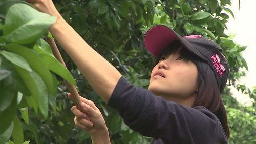 陳喜美兩年前返鄉學習田間管理