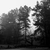 2014-09-03-Pines-67-Edit.jpg