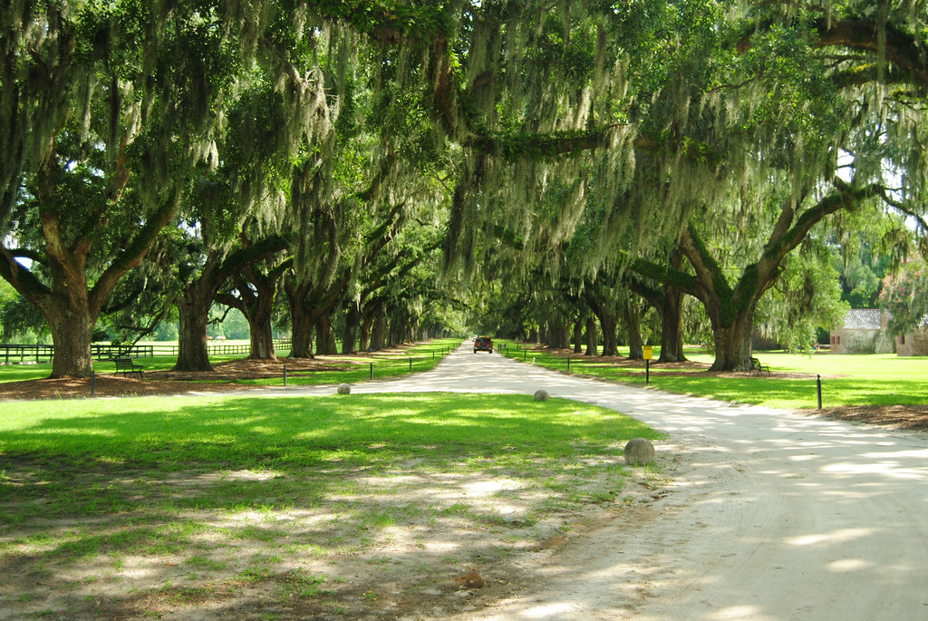 Boone Hall_Avenue of Oaks