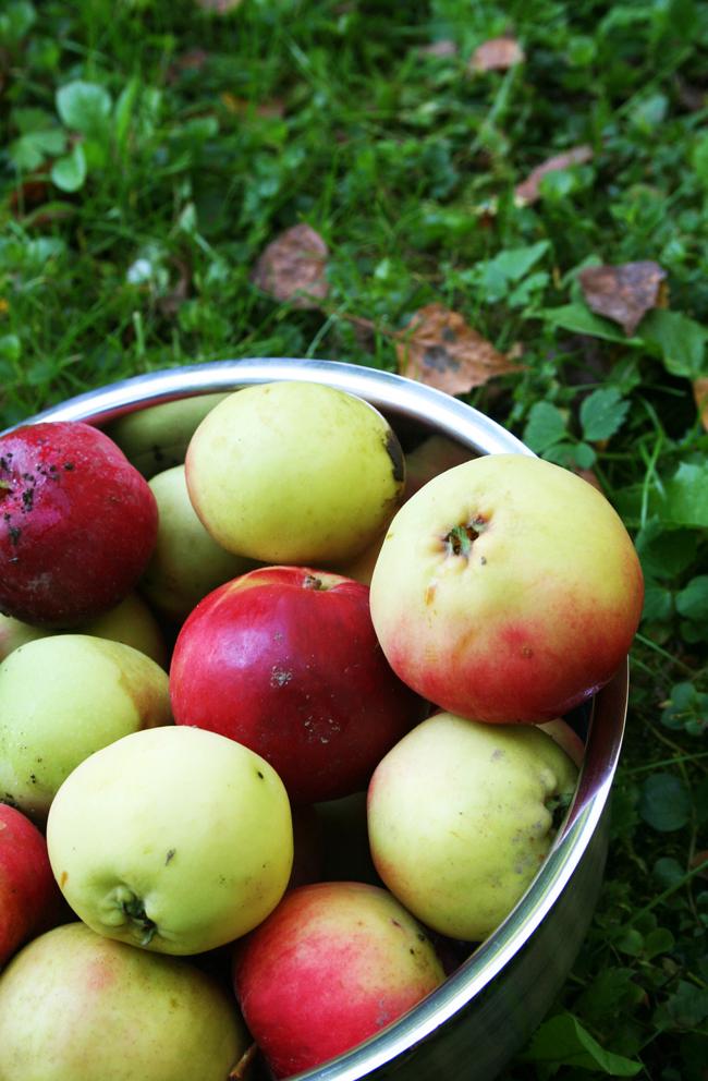 Omenapuilla3