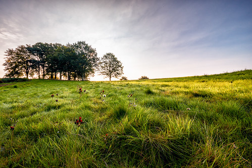 morning autumn mist herefordshire mellow fruitfulness bringstycommon