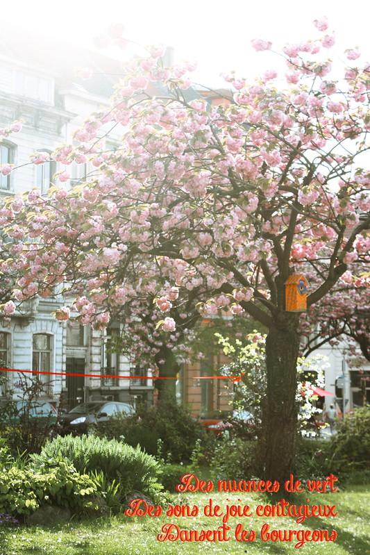 haiku-printemps