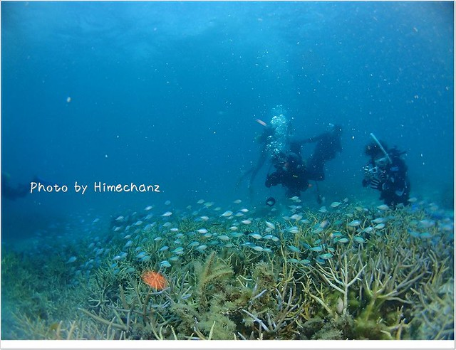 サンゴの上にはデバスズメダイが美しい景色に更に花を添えてくれています。
