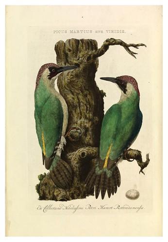 021-Picus Martius- Nederlandsche vogelen- Nationale bibliotheek van Nederland