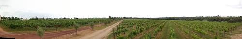 panorama ice méxico vineyard wine panoramic panoramica guanajuato vino doloreshidalgo viñedo microsoftice cunadetierra
