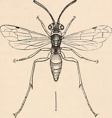 "Image from page 210 of ""Guide to the study of insects, and a treatise on those injurious and beneficial to crops: for the use of colleges, farm-schools, and agriculturists"" (1872)"