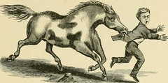 """Image from page 282 of """"The standard horse book, comprising the taming, controlling and education of unbroken and vicious horses"""" (1895)"""