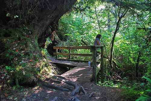 Trail at Sombrio Beach, Juan de Fuca Provincial Park, Port Renfrew, British Columbia, Canada