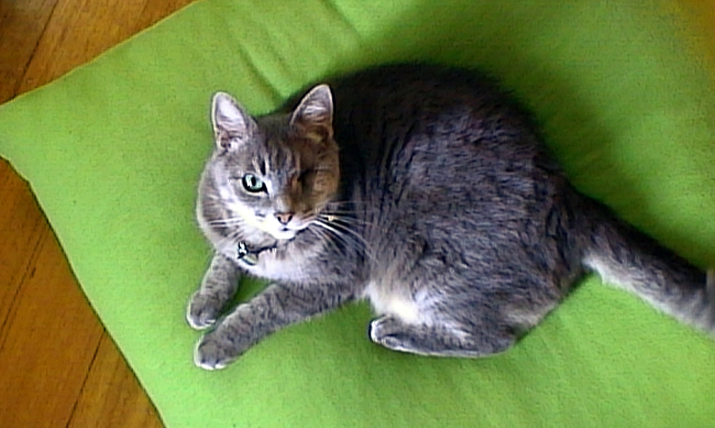 smoggy on his cushion