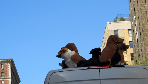 Faux Dogs on roof of Van in NYC