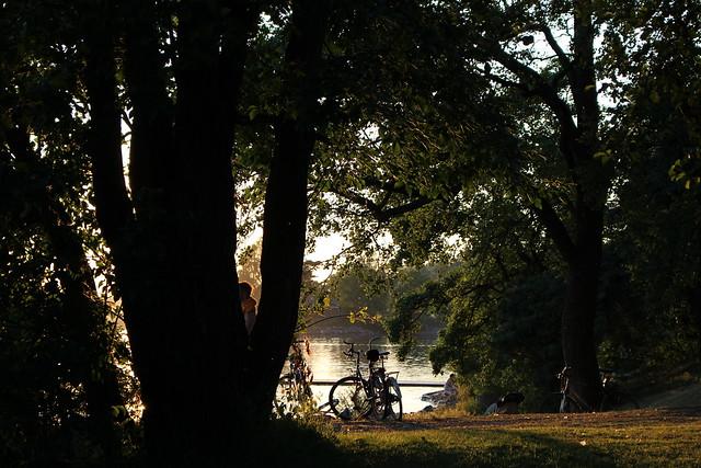 bikes_trees_shadows