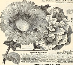 """Image from page 91 of """"Manual of everything for the garden : 1894"""" (1894)"""