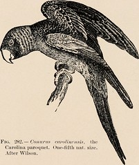 """Image from page 316 of """"Introduction to zoology; a guide to the study of animals, for the use of secondary schools;"""" (1900)"""