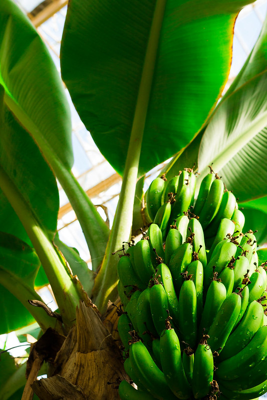 Botanical Conservatory_06