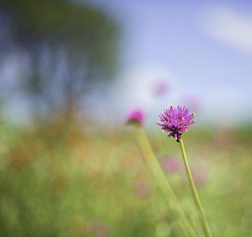 flower northernvirginia d610 50mm14g