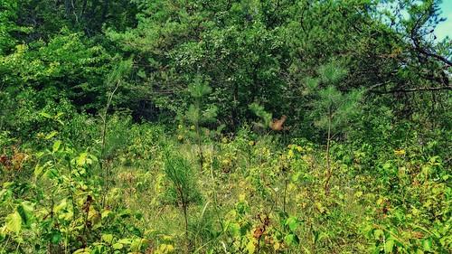 Otter Creek Oak Barrens State Natural Area