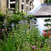 Steve's garden in August