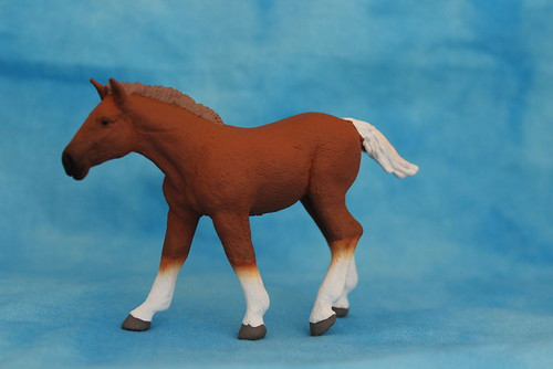 Walkaround of the 2014 Mojo Fun Suffolk Punch Foal 14877990368_b5e46eb6af