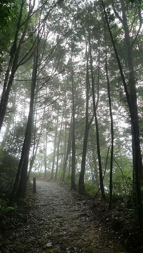 20140809-橫嶺山步道 (8)