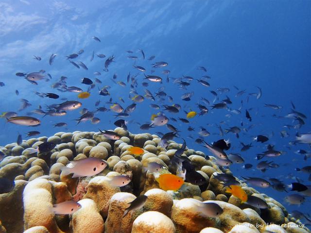 サンゴの根頭には熱帯魚たちがわっさ~♪