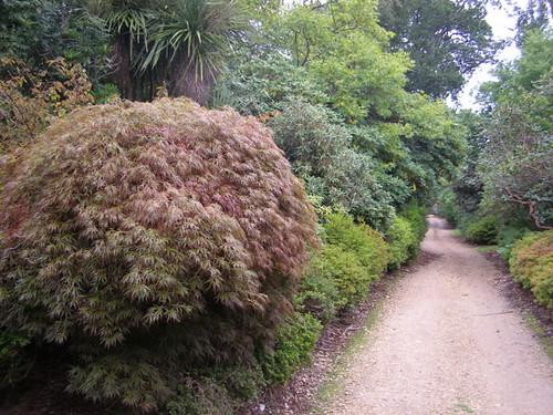 Foliage (2)
