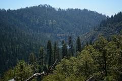 Calaveras Big Trees State Park 1