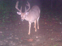 Latest pic of that big buck. But, he should have lost the velvet by now, I'd think.