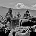 Traffic Jam Western Mongolia DSC_1877 by JKIESECKER