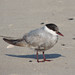 live2bird has added a photo to the pool:Cape May, NJ09.19.2014