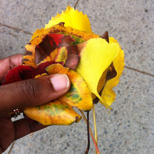 #autumn #leaves are falling down, falling down, falling down. #fall #yellow #red #brown #green #ombre #September in #Brooklyn #leaf #colors #woodland #stroll