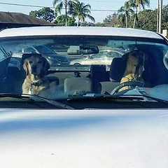 There was some other #Kahwa boys #dogs #driving up for the Saturday morning hang out with #gracechristianfellowship men @baskervillage