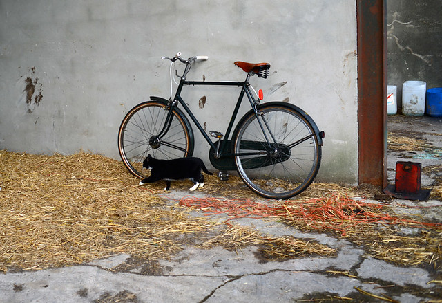 Bike and Barn Cat