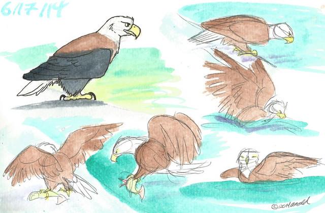 6.17.14 - Eagle!!!