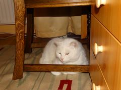 Kefír a szék alatt 2
