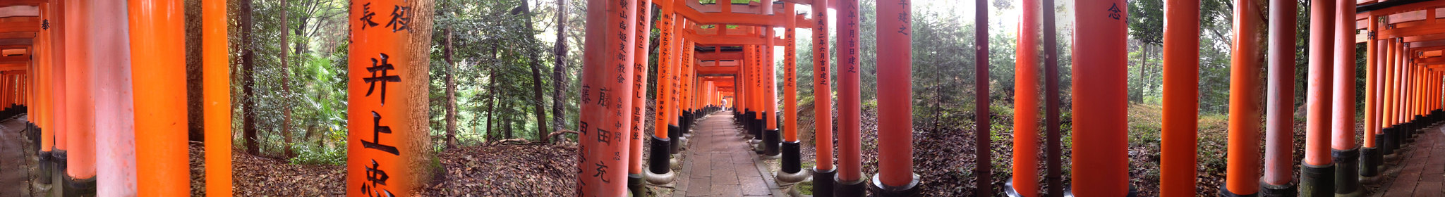 Fushimi Inari shrine panorama