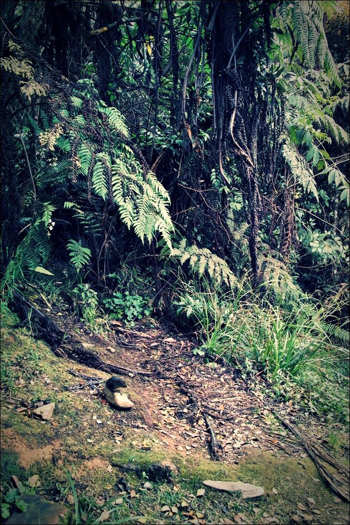 날씬 다람쥐-'키나발루 산 등정 Climbing mount Kinabalu Low's peak the summit'
