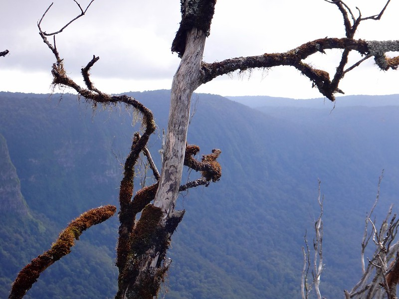 The Pinnacle, Border Ranges National Park