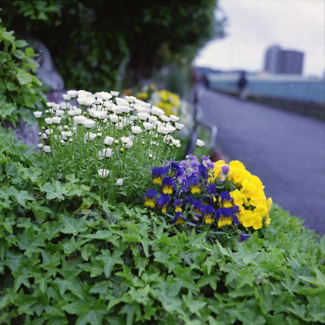 華 - Flower
